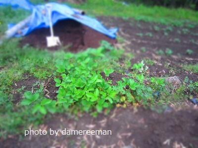 2015.4.19菜園17