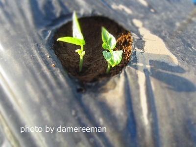 2015.4.26第三の畑3
