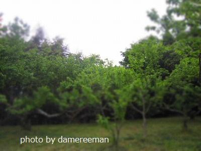 2015.4.29菜園