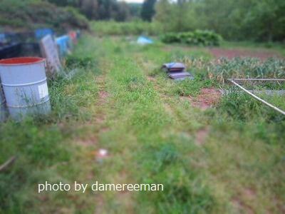 2015.4.29菜園3