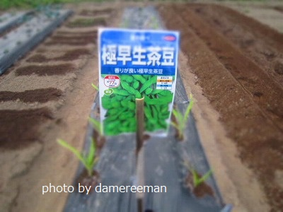2015.4.29第三畑5