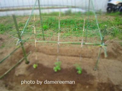 2015.4.30菜園2