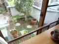 カフェスペースから見る花々