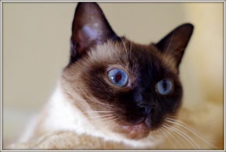 ミイナ白い眼