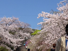 光雲神社の参道階段。