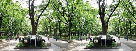 靭公園 ケヤキ並木⑤(平行法)