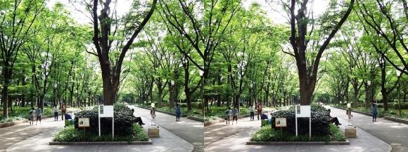 靭公園 ケヤキ並木⑤(交差法)