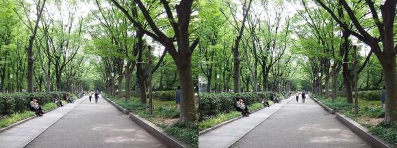 靭公園 ケヤキ並木④(平行法)