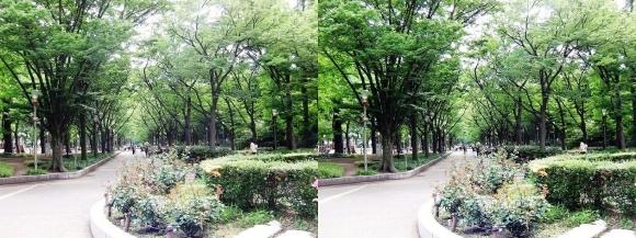 靭公園 ケヤキ並木②(平行法)