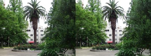 靭公園 ケヤキ並木①(平行法)