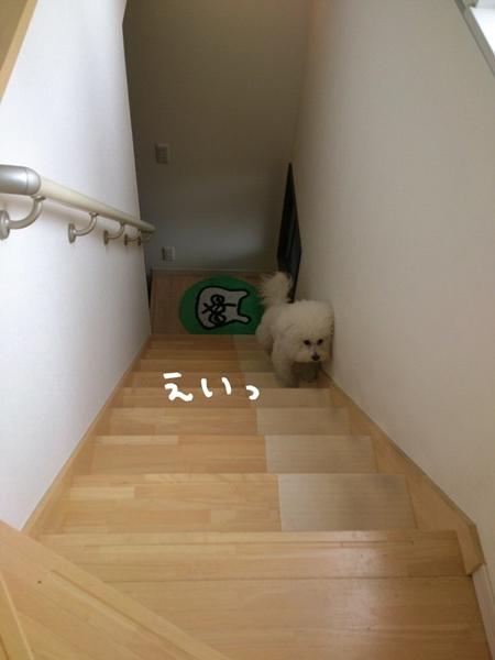 IMG_6009.jpg