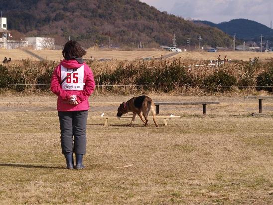 0131S犬1