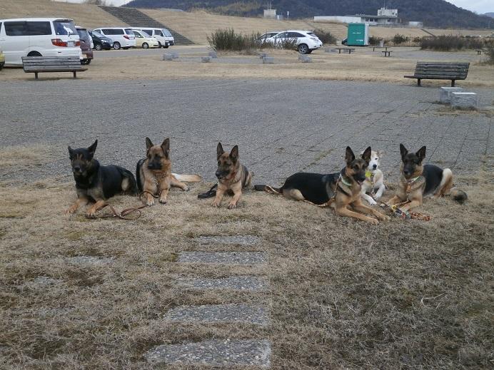 0131S犬記念撮影