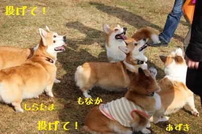 甘味処3コギ勢ぞろい☆
