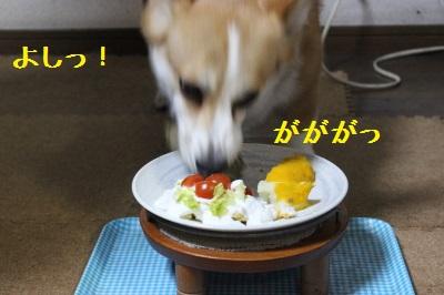 ゆっくり食べてくださーい。