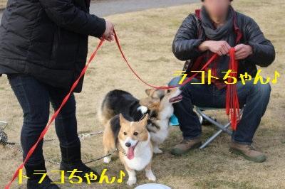 トラコちゃん&ラコトちゃん姉妹♪