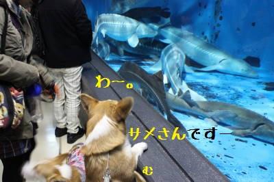 サメさんを見る。