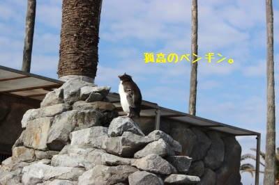 ペンギン好きです。