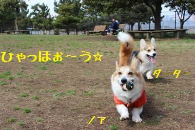ノア&ダーちゃん