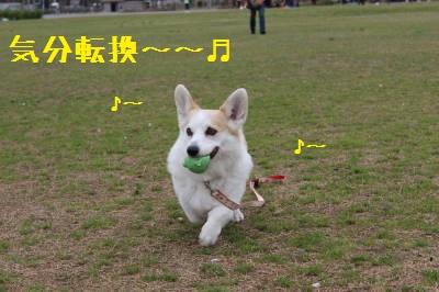 さっきとは別犬☆