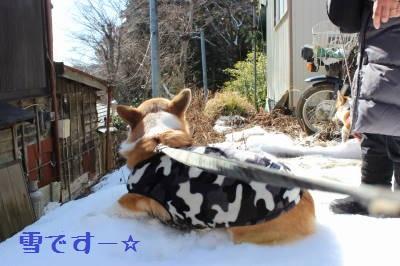 わざわざ雪に埋まりに行く。