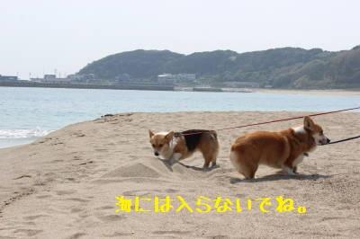 砂浜散歩。