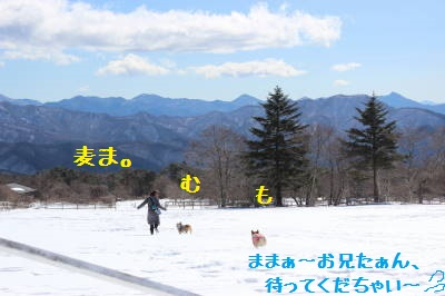 雪原で遊ぶ。