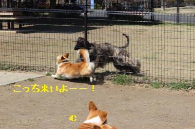 柵越しに遊ぶ。