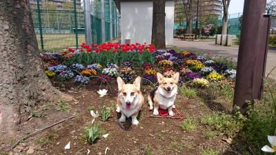 春はいいねぇ。