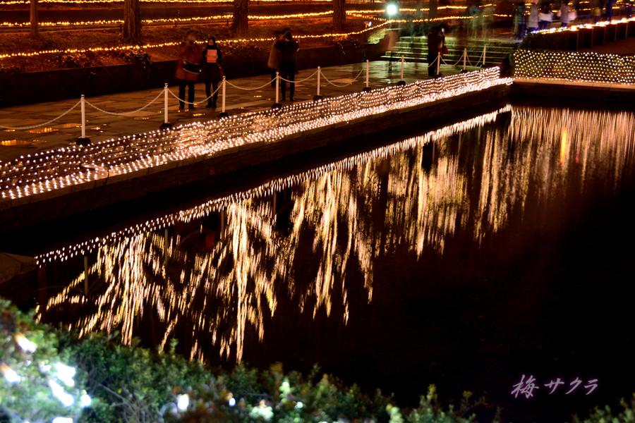 昭和記念公園のイルミ1(4)変更済