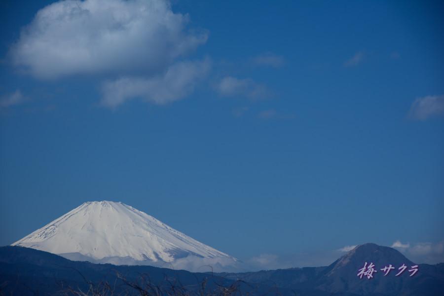 小田原・富士山2変更済