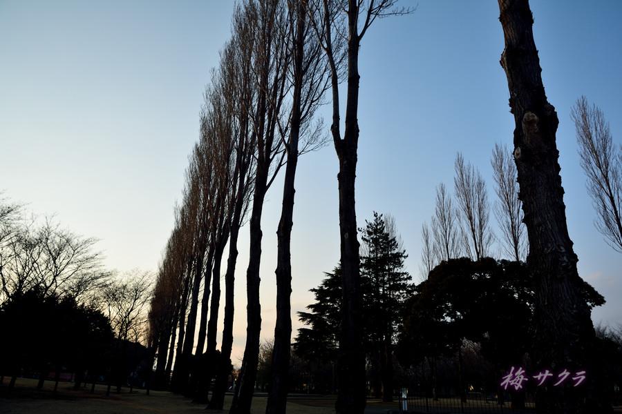 彩の森公園7変更済