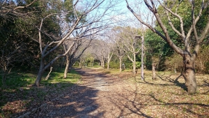 大阪南港野鳥園