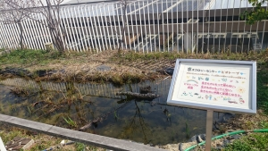 京エコロジーセンター