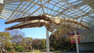 大阪市立自然史博物館