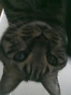 20150215自撮り猫01_R