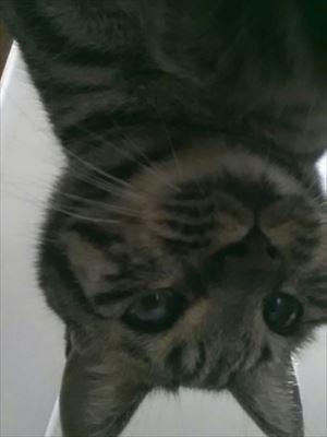 20150215自撮り猫02_R