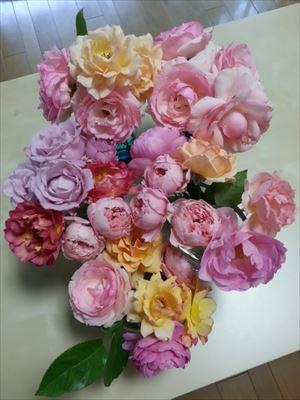 20140620部屋のバラ2_R