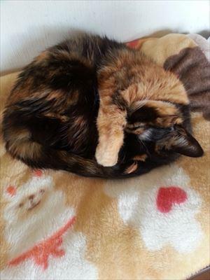 2015年猫の日アビー_R