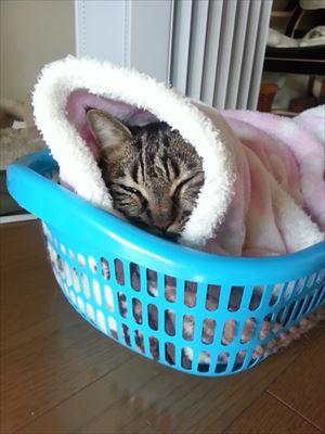 2015年猫の日よしお_R