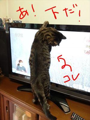 20150322よしおとテレビ03_R