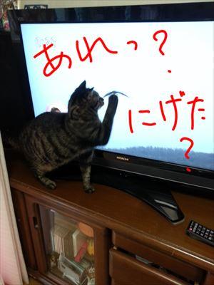 20150322よしおとテレビ05_R