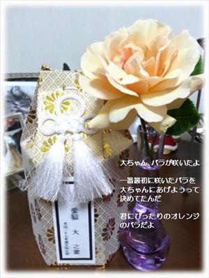 20150503大ちゃん、咲いたよ_R
