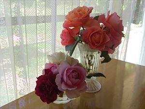 20150511kちゃんちに行ったバラとウーメロ_R
