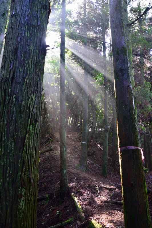 鷹ノ巣山 (2)
