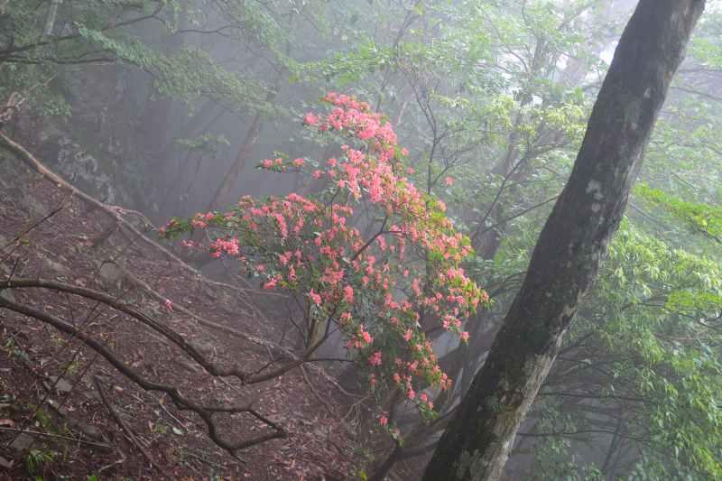 鷹ノ巣山 (7)