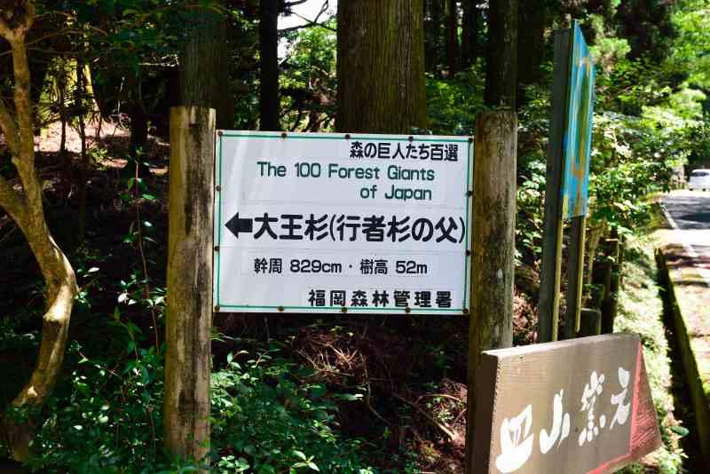 鷹ノ巣山 (36)