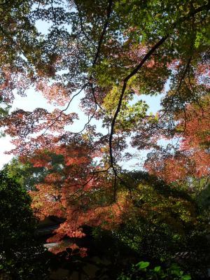 2014.11.23明治神宮-12