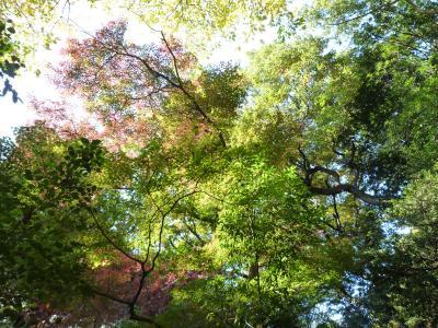 2014.11.23明治神宮-14