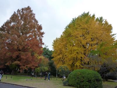 2014.11.30銀杏-2